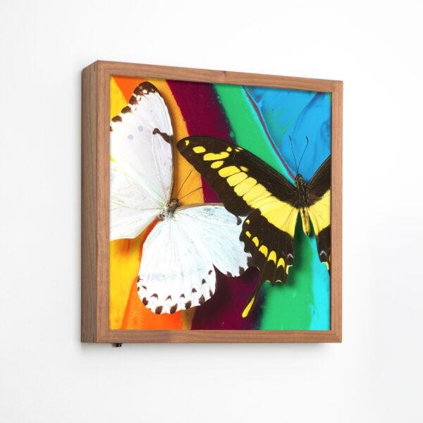 Michael-Brorsen-sommerfugle-lyskasse