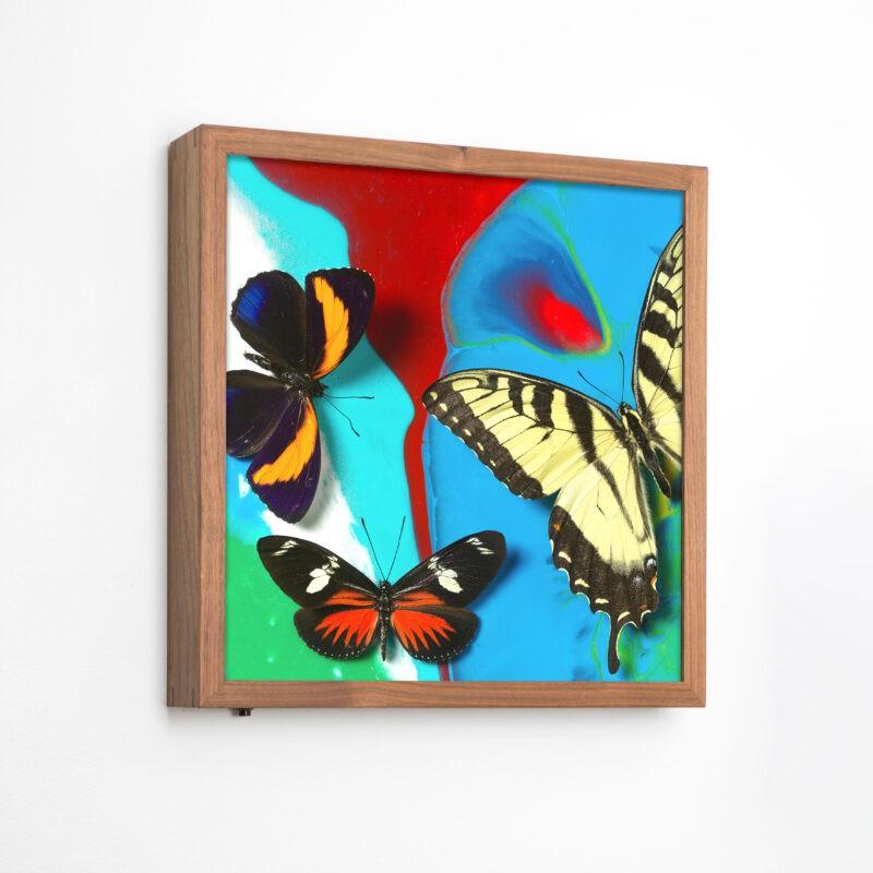 Michael-Brorsen-sommerfugle-lyskasse2