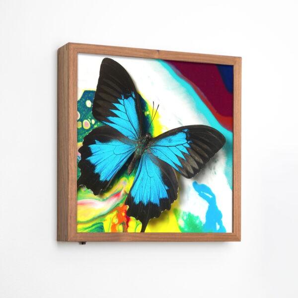 Michael-Brorsen-sommerfugle-lyskasse3